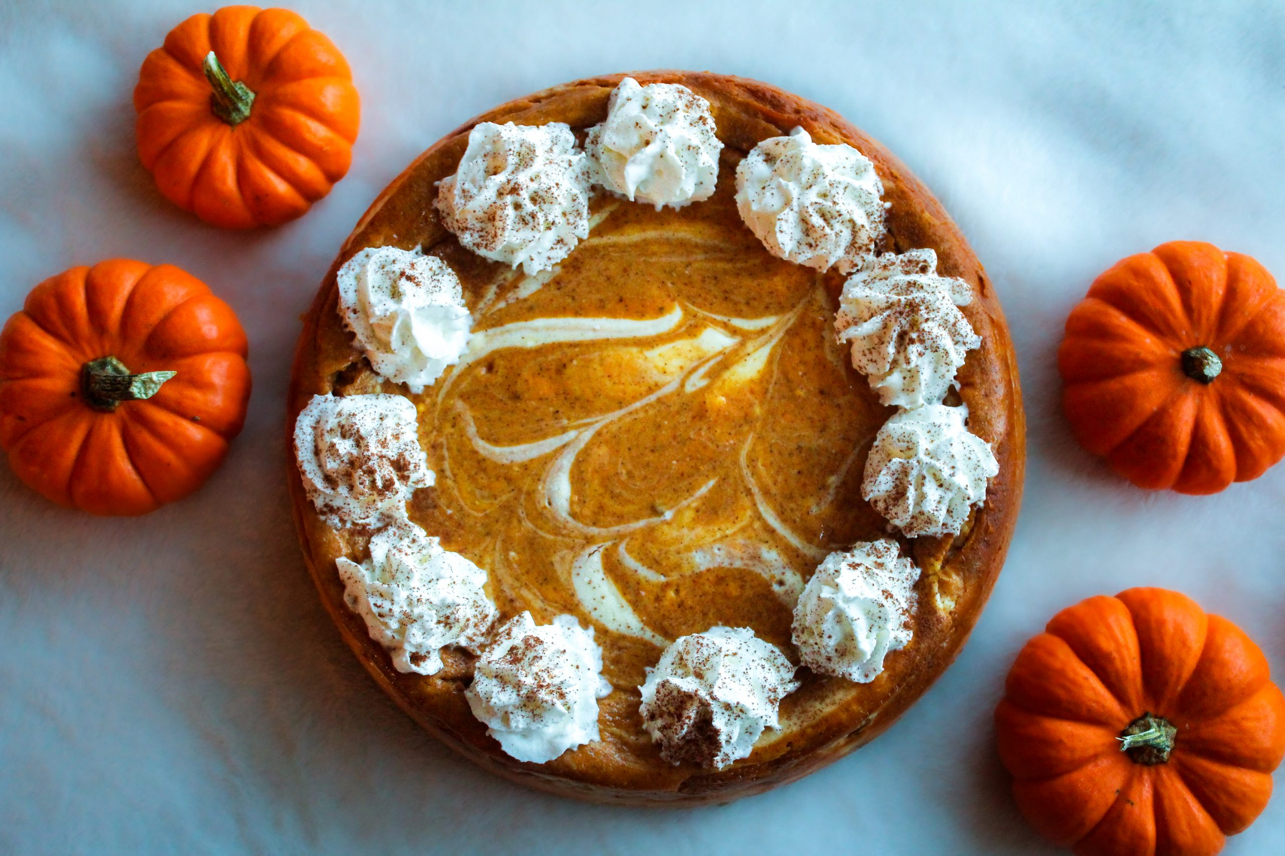 pumpkin swirl cheesecake full with whipped cream topping and mini pumpkin decorations